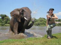 Elephant walk(2)